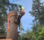 A chainsaw drills through a tree stump. It is a dark day and the log is recently cut.